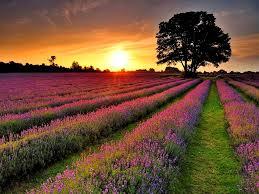 prado soleado